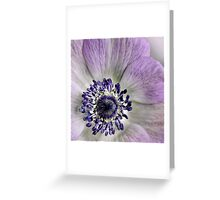 Fresh Anemones... (square) Greeting Card