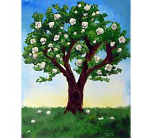 Popcorn Popping on the Apricot Tree Photographic Print