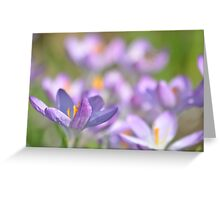 The Crocus Patch. Greeting Card