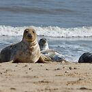 Horsey Seal by Nicholas Jermy