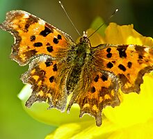 Comma , Fuel Stop . by Jamie  Green