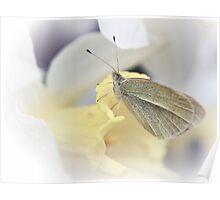 Daffodil Perch Poster