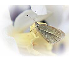 Daffodil Perch Photographic Print