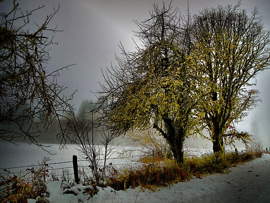 Along The Rural Road by Charles & Patricia   Harkins ~ Picture Oregon