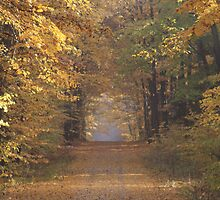 Old Country Road by Sonya Lynn Potts