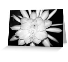 Queen of the Night No. 1 Greeting Card