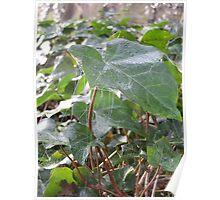 Cobwebs part ii Poster