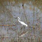 Heron at Akagera National Park by Ben Fatma Marc