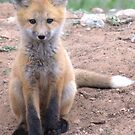 Another Baby Fox by Betsy  Seeton