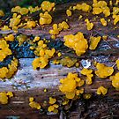 Witches Butter by Steve Hunter