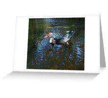 MUSCOVY DRAKE Greeting Card
