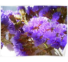Dried Purple Flowers Poster
