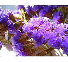 Dried Purple Flowers Photographic Print