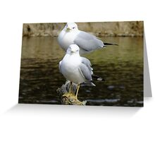 Hello! Hello! Whats Up? Greeting Card