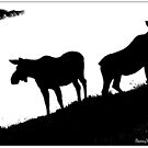 Moose Silhouette by Betsy  Seeton
