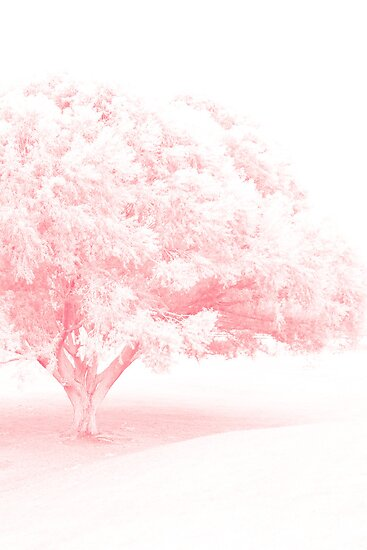Frosted Pretty Pink Tree by Sylvia Coomes