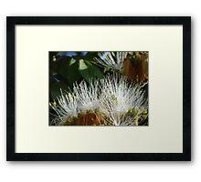 Jungle Blossoms In The Sunshine - Flores De La Selva En La Luz Del Sol Framed Print
