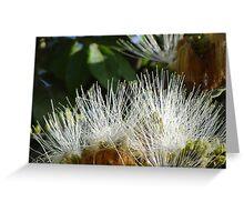 Jungle Blossoms In The Sunshine - Flores De La Selva En La Luz Del Sol Greeting Card