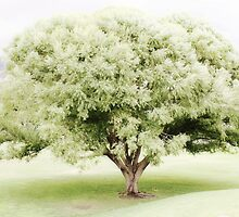 Ethereal Frosted Green Tree by Sylvia Coomes