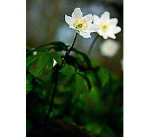 Woodland Bloom Photographic Print
