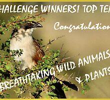 CHALLENGE BANNER -BREATH TAKING WILD ANIMALS & PLANTS by Magriet Meintjes