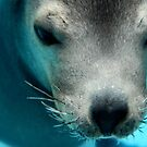 Zalophus Californianus Alias the Sea Lion by nadinecreates