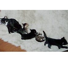 My lovely kittens - sweeties Photographic Print