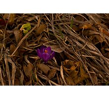 Another Spring Flower Photographic Print