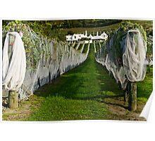 Vineyard 5 Poster