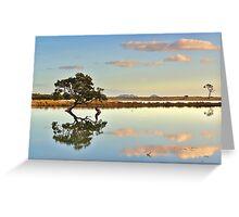 Lone Mangrove Dusk Greeting Card