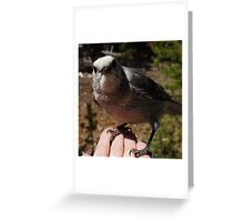 One of My Gray Jays Greeting Card