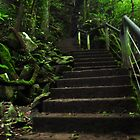 forrest stairs by warren dacey