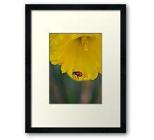 Lady Daff. Framed Print