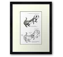 Textbook Hyperactive Ferret Framed Print