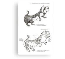 Textbook Hyperactive Ferret Canvas Print