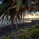 A Fruitful Pandanus Morning by Daniel Rankmore