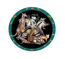 Australian fauna plate Photographic Print