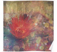 Cactus Flower Textured Poster