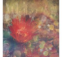 Cactus Flower Textured Photographic Print