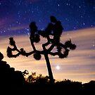Venus and the Joshua Tree by Troy Dalmasso