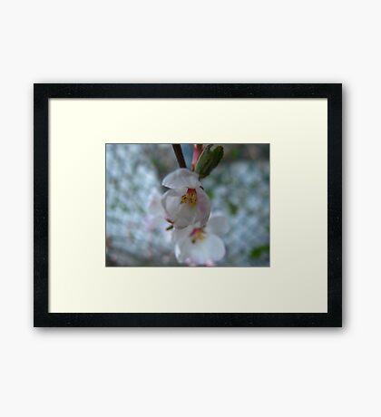 Marching bloom Framed Print