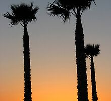 Pismo Palms by boohe
