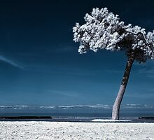 The Lone Rider (Infrared) by Don Alexander Lumsden (Echo7)