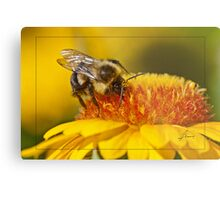 Pollen Bathing Metal Print
