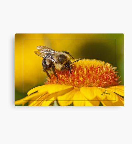Pollen Bathing Canvas Print