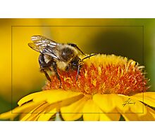 Pollen Bathing Photographic Print