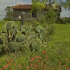 Spring at the Old Ranch  by Tamas Bakos