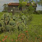 Spring at the Old Ranch  by Tamas Bakos