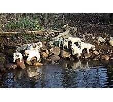 8 Great Pyrs Pondside Photographic Print