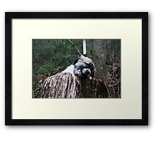 Neiko I Am NOT Chewing A Thing!  Framed Print